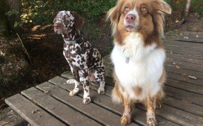 Antrag zur Schaffung von Hundefreilaufflächen